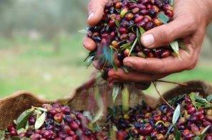 Griechisches Bio-Olivenöl & Feinkost direkt vom Erzeuger